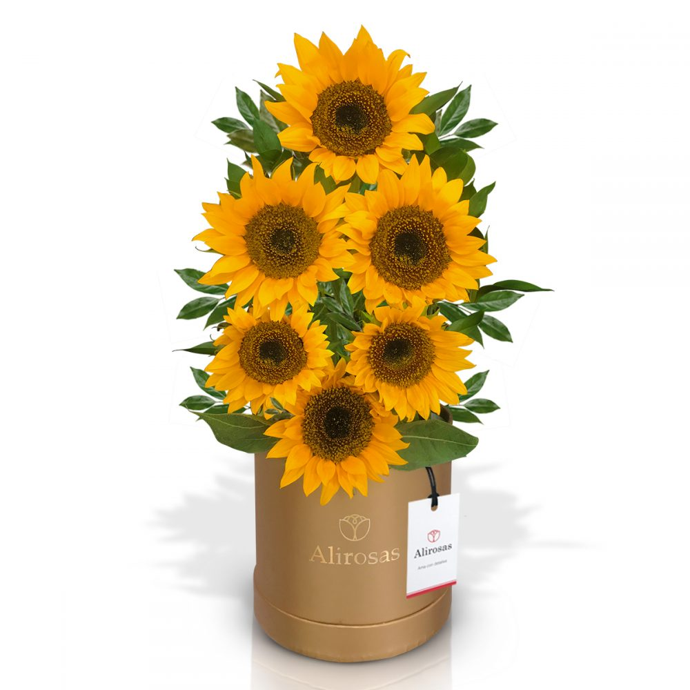 Box de girasoles